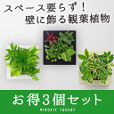 【midorie 10%オフ】ミドリエ スクエアフレーム 3個セット/全4色5タイプ【壁掛け観葉植物】【ギフト/プレゼント】