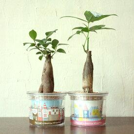 自動灌水 プランター Paccot(パコット) 植物付 室内 観葉植物 ハーブ ギフト プレゼント 誕生日 記念日