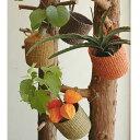 ステム-stem Abaca Basket/アバカバスケット 14x13cm B1220【観葉植物の鉢】