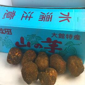 秋田県産他 山の芋 10kg入り1箱 12〜45玉入