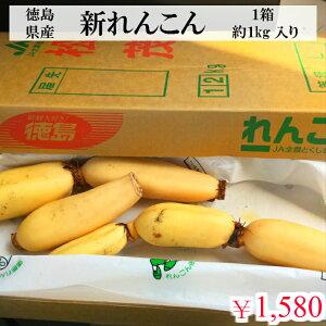 徳島県産 新れんこん 約1kg 入 1箱