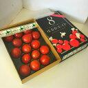 北海道産 はるかエイト フルーツトマト 8〜18玉入 1箱