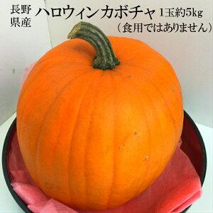 北海道産 ハロウィンカボチャ 観賞用 約4〜5kg 1玉