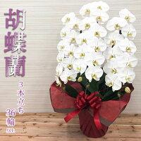 胡蝶蘭3本立白【スペシャル】01