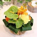 【フラアート花門】 7月のアレンジ:アンスリウムこの時期におすすめ花 あす楽 送料無料 プレゼント フラワー ギフト …