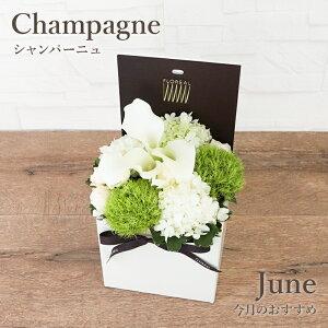 今月の花 6月 カラー 花 ギフト 誕生日 フラワーボックス フロレアル マンスリーリコメンド シャンパーニュ ボックスフラワー 生花 フォト付 楽天1位 あす楽 送料無料 お花 フラワーアレンジ