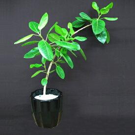 グリーン ギフト フロレアル 観葉植物 中鉢B プランツ 送料無料 開店祝い 就任祝い 移転祝い 引っ越し祝い 新築祝い お祝い 記念日 プレゼント メッセージカード 植物 インテリア オフィス おしゃれ