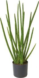 アートフラワー サンセベリアポット グリーン @16800x1コセット GLP-1507 《2018ds》   造花 お手入れ不要 アレンジ 観葉植物 グリーン インテリアグリーン 室内 ディスプレイ お手軽 装飾 飾り 花資材 グリーンポット 花材 サンセベリア