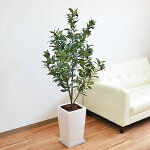 人工観葉植物オリーブ実付きスクエア陶器鉢光触媒加工