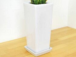 観葉植物サンスベリア白陶器鉢植え陶器鉢の拡大