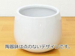 陶器鉢の説明