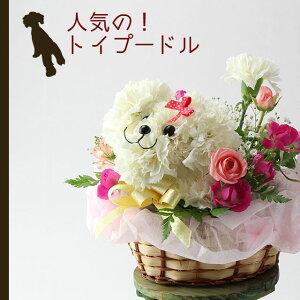 【送料無料】トイプードル(白)のアニマルフラワーアレンジメントまるでぬいぐるみみたい☆ふわふわでキュンとしちゃう♪かわいい生花カーネーションギフト