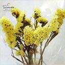 ハーバリウムに!ドライフラワー スターチス(黄色)3〜5本当店の畑で栽培しました飛騨産天然素材