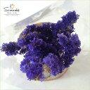ハーバリウムに!ドライフラワー スターチス(青紫)3〜5本当店の畑で栽培しました飛騨産天然素材