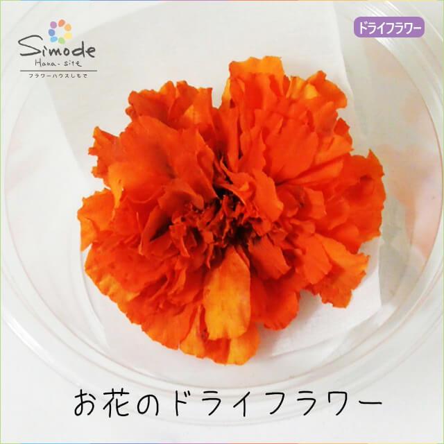 ハーバリウムに入れられるお花のドライフラワー!新ドライフラワー マリーゴールドオレンジ(大)1輪