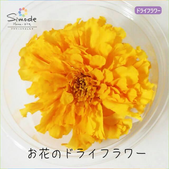 ハーバリウムに入れられるお花のドライフラワー!新ドライフラワー マリーゴールド黄色(大)1輪