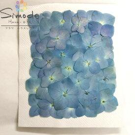 【S-920】押し花 アジサイ(あじさい・紫陽花)青 50枚押し花額やレジンアクセサリー制作などハンドメイド素材として人気です飛騨で手作りしています。国産品の安心品質です!