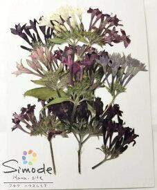 【S-974】ペンタス茎つき9本入り押し花額やレジンアクセサリー制作などハンドメイド素材として人気です押し花素材・押し花パック飛騨で手作りしています。国産品の安心品質です!