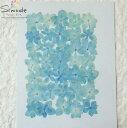 【S-754】押し花 アジサイ 青 八重 35枚ナチュラル素材 押し花素材 押し花額 手作り ハンドメイド シック ハーバリウ…