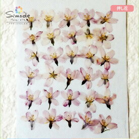 【S-687】押し花 桜(さくら・サクラ)小30枚レジン、キャンドル、フォトフレームなどのハンドメイド・DIY素材に。飛騨のお花屋さんが手作りしました。安心安全の国産素材です。