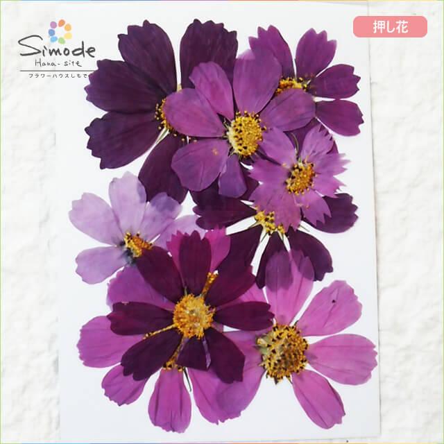 【S-651】押し花 コスモスピンク系9枚レジン、キャンドル、フォトフレームなどのハンドメイド・DIY素材に。飛騨のお花屋さんが手作りしました。安心安全の国産素材です。