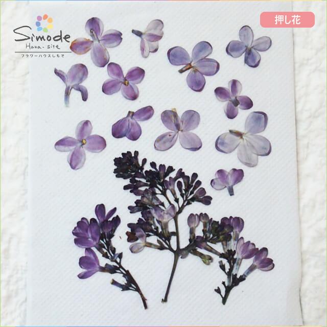 【S-652】押し花 ライラック茎つき3本、花10枚レジン、キャンドル、フォトフレームなどのハンドメイド・DIY素材に。飛騨のお花屋さんが手作りしました。安心安全の国産素材です。