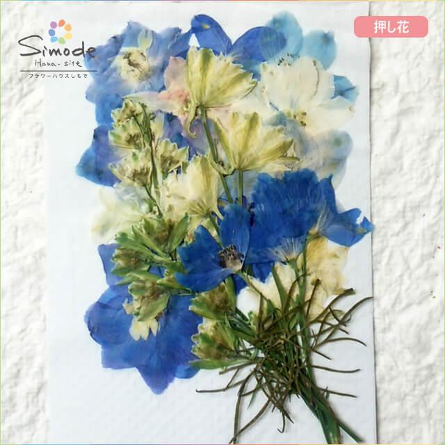 【S-671】デルフィニウム(チドリソウ・千鳥草)ミックス12枚レジンアクセサリー、スマホケース、キャンドル、フォトフレームなどお花のハンドメイド・DIY素材に。安心安全の国産品質です