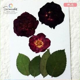 【S-680】ミニバラ赤3枚、葉つきレジンアクセサリー、スマホケース、キャンドルなどのハンドメイド・DIY素材として。飛騨のお花屋さんが手作りでつくっています。安全安心の国産品質です。
