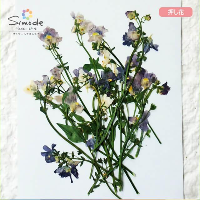 【S-681】押し花 ネメシア10本当店で手作りした押し花素材です。ハーバリウム、レジン、キャンドルなどハンドメイド・DIY作品の素材にぜひご利用ください。