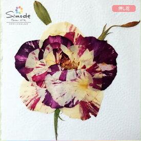 【S-682】押し花 花材バラ(マーブル)組み立て1組レジンアクセサリー、スマホケース、キャンドルなどのハンドメイド・DIY素材として。飛騨のお花屋さんが手作りでつくっています。安全安心の国産品質です。