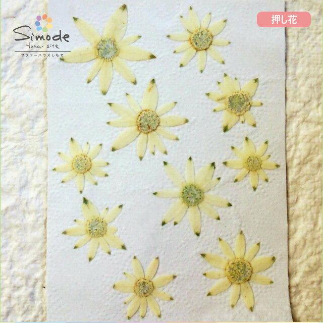【S-636】押し花 フランネルフラワー大小ミックス10枚入り飛騨のお花屋さんが手作りしています。安心安全の国産品質です。