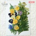 【S-698】押し花 花材 パンジーセットパンジー10枚、シダ2枚、アケボノ草3本飛騨のお花屋さんが手作りしています。安…
