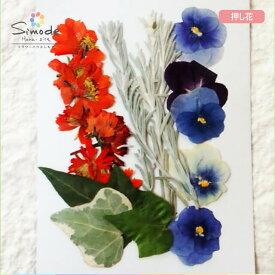 【S-699】押し花 花材 パンジーセットパンジー5本、キバナコスモス5本、アイビー3本、エモフィラ3本飛騨のお花屋さんが手作りしています。安全安心の国産品質です