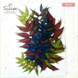 【S-710】押し花 着色チンジバイの葉7枚ハーバリウム、レジン、キャンドルなどのハンドメイド・DIY素材に。安心安全の国産素材です。