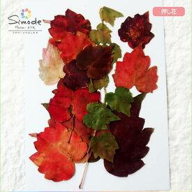 【S-716】押し花 花材ツタの紅葉10枚飛騨のお花屋さんの手作りでつくった押し花です。安心安全の国産品質