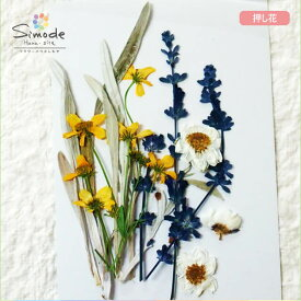 【S-721】押し花 花材 いろいろセットガザニアの葉3本、デージー5本、サルビア3本、花かんざし3枚飛騨のお花屋さんが手作りしています。安全安心の国産品質です