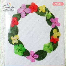 【S-724】花材・押し花のフラワーリース(アカシアの葉)着色アジサイ、銀葉アカシアリース作品に♪もちろん個々に使ってもOK!ハンドメイド素材として人気です。飛騨で手作りしています。国産品の安心品質です!