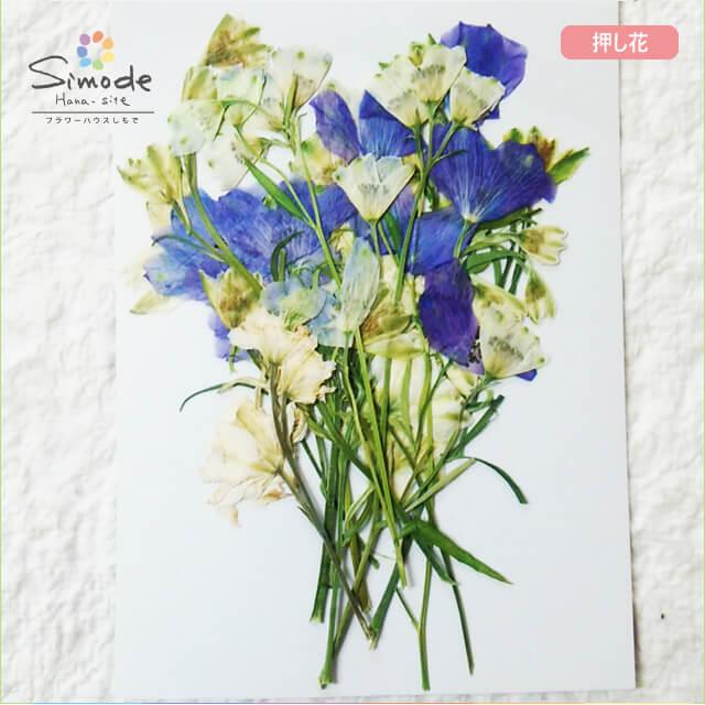 【S-723】押し花 花材 デルフィニウムミックス10本飛騨のお花屋さんが手作りしています。安全安心の国産品質です