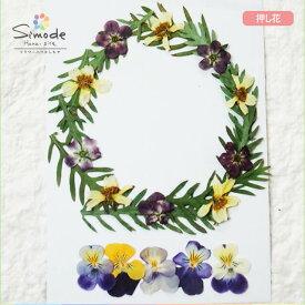 【S-736】花材・押し花のフラワーリース(ビオラ)ビオラ、キバナコスモス、クモマグサ、デージーの葉リース作品に♪もちろん個々に使ってもOK!ハンドメイド素材として人気です。飛騨で手作りしています。国産品の安心品質です!