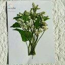 【S-317】そばの花(白)10本押し花額やレジンアクセサリー制作などハンドメイド素材として人気です押し花素材・押し…