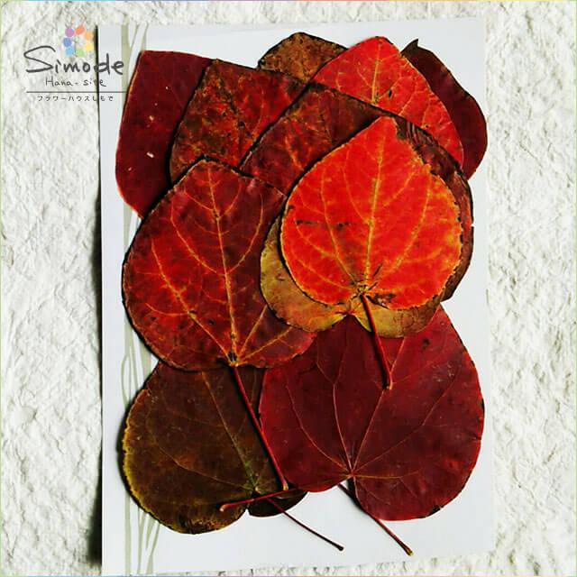 【S-325】押し花 マンサク虫喰いあり紅葉12枚押し花額やレジンアクセサリー制作などハンドメイド素材として人気です押し花素材・押し花パック
