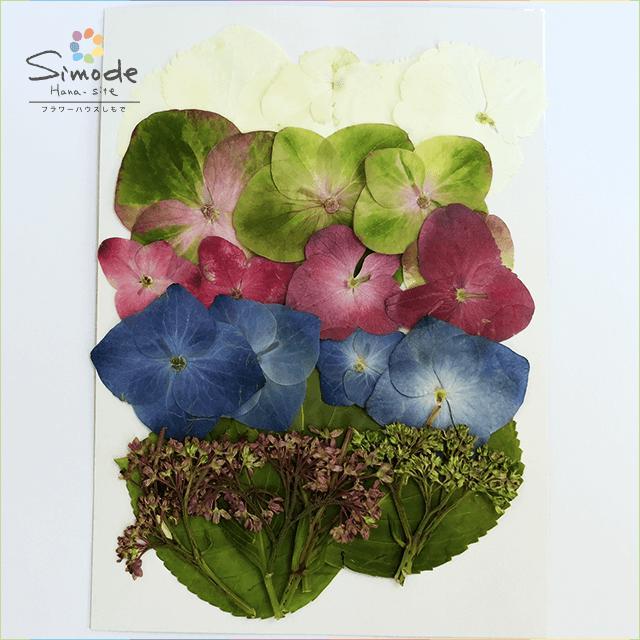 【S-389】押し花 アジサイ(あじさい・紫陽花)額・葉各4枚と花3色各5枚セット押し花額やレジンアクセサリー制作などハンドメイド素材として人気です飛騨で手作りしています。国産品の安心品質です!