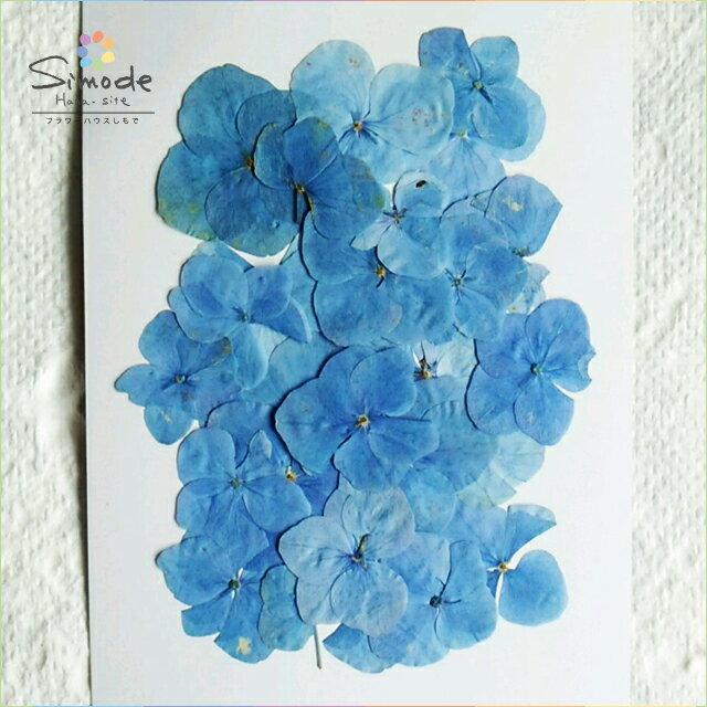 【S-396】押し花 アジサイ(あじさい・紫陽花)青 30枚押し花額やレジンアクセサリー制作などハンドメイド素材として人気です飛騨で手作りしています。国産品の安心品質です!