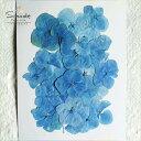 【S-396】押し花 アジサイ(あじさい・紫陽花)青 30枚押し花額やレジンアクセサリー制作などハンドメイド素材とし…
