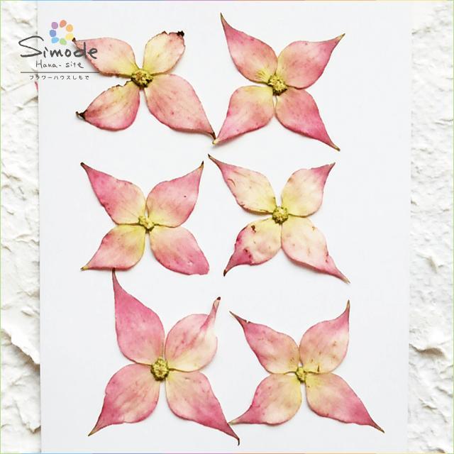 【S-433】押し花 ヤマボウシ(ピンク)6枚押し花額やレジンアクセサリー制作などハンドメイド素材として人気です飛騨で手作りしています。国産品の安心品質です!