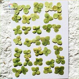 【S-493】押し花 アジサイミニ(グリーンアナベル)30枚(あじさい・紫陽花)押し花額やレジンアクセサリー制作などハンドメイド素材として人気です飛騨で手作りしています。国産品の安心品質です!