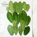 【S-566】押し花 落花生の葉18枚押し花額やレジンアクセサリー制作などハンドメイド素材として人気です飛騨で手作り…