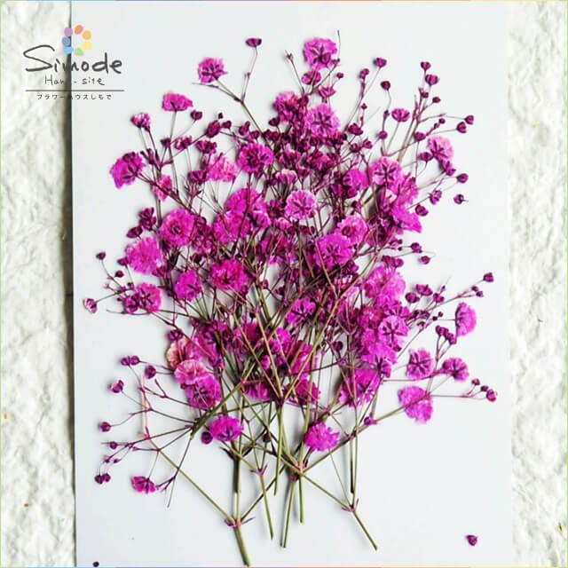 【S-586】押し花 着色カスミソウ(かすみ草)ピンク15本押し花額やレジンアクセサリー制作などハンドメイド素材として人気です飛騨で手作りしています。国産品の安心品質です!