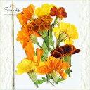 【S-607】マリーゴールド9枚押し花額やレジンアクセサリー制作などハンドメイド素材として人気です押し花素材・押し花…
