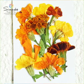 【S-607】マリーゴールド9枚押し花額やレジンアクセサリー制作などハンドメイド素材として人気です押し花素材・押し花パック飛騨で手作りしています。国産品の安心品質です!